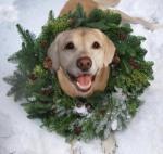 Biscuit wreath